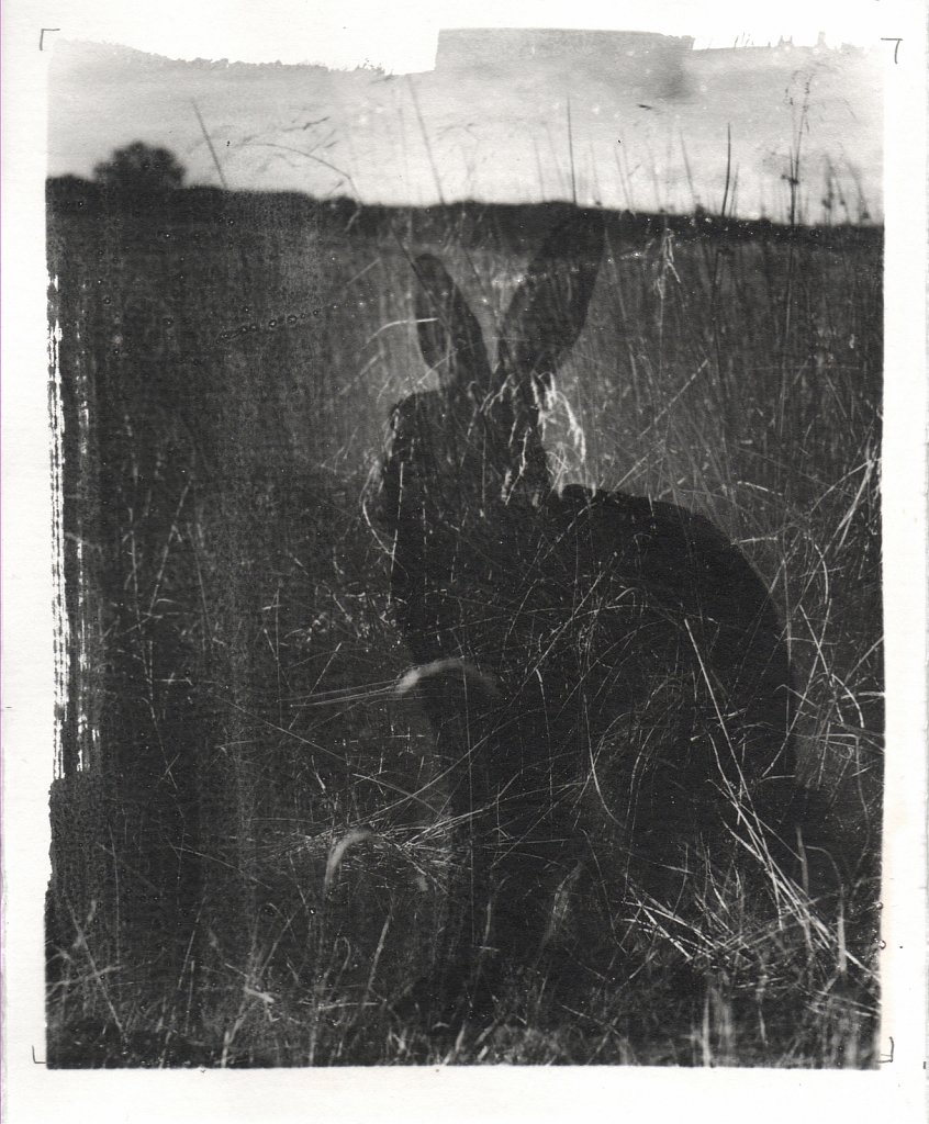 Shadow of the Witch Hare